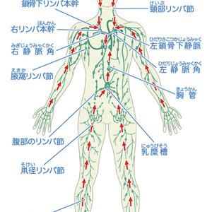 リンパの免疫機能